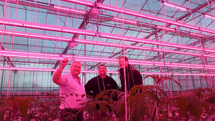 Philips Greenhouse lights on the crops at Melrow Salads