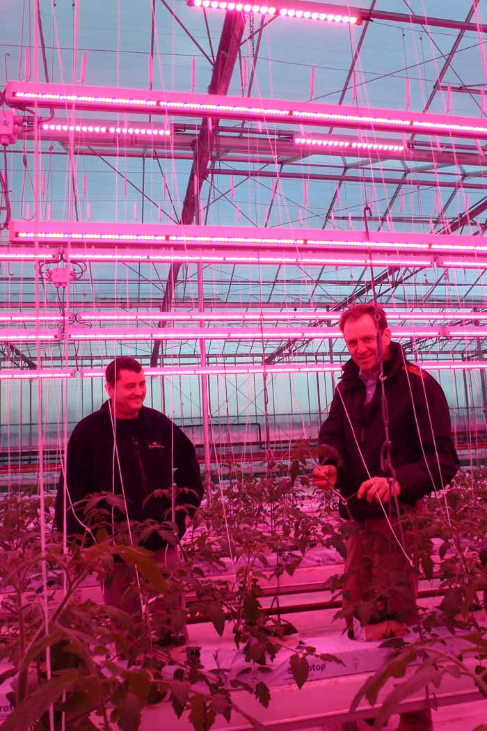 Two men show off healthy crops in the Melrow Salads greenhouse, lit by Philips LED Greenhouse lights