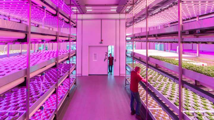 Vertical farming led grow lights