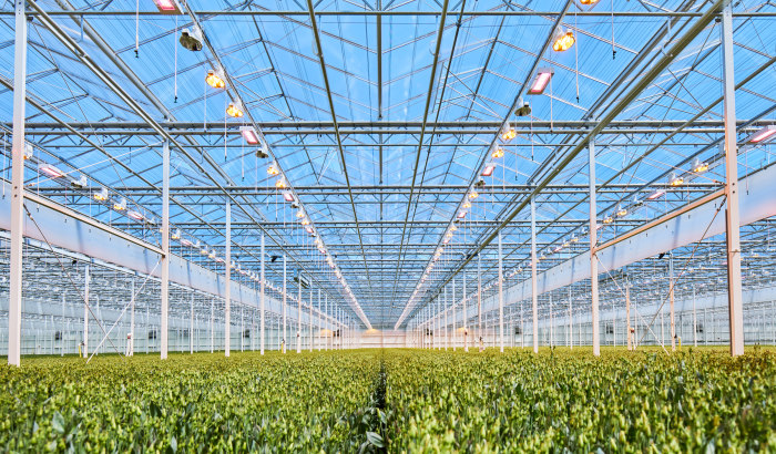 8 choices to a cost-effective LED grow light, part 1