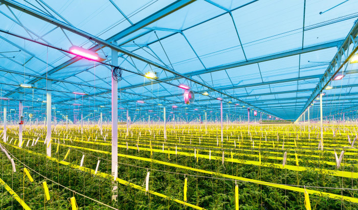 8 choices to a cost-effective LED grow light, part 2